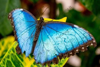 Butterfly Stock Photo Pack