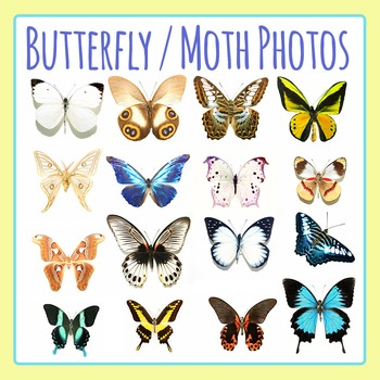 Butterfly Photographs / Photos Clip Art Commercial Use