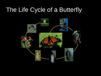 Butterfly Power Point