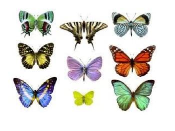 Butterfly PowerPoint