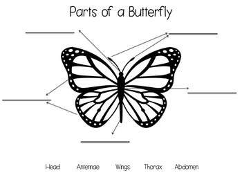 Raising Butterflies Resource and Activity Packet