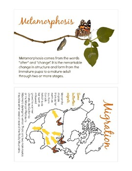 Butterfly Science Cards