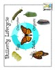 Butterfly Sight Words: Catching the Beauty of Words