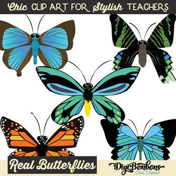 butterfly species unique clip art by digibonbons clipart by claudia
