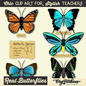 Butterfly Species Unique Clip Art