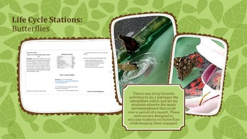 Butterfly Stations Activity