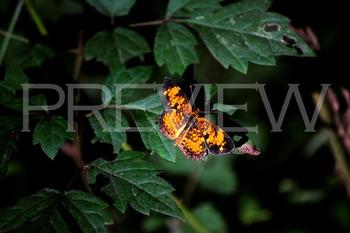 Butterfly Stock Photos Bundle Set