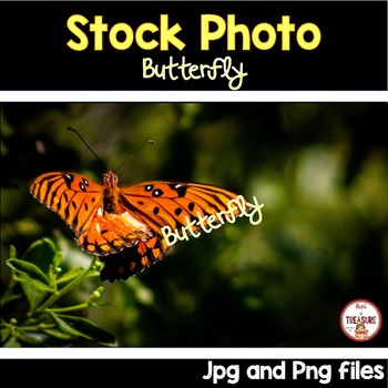 Butterfly Stock Photo- Animals