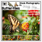 Photographs Butterfly Stock Photos Commercial and Educational