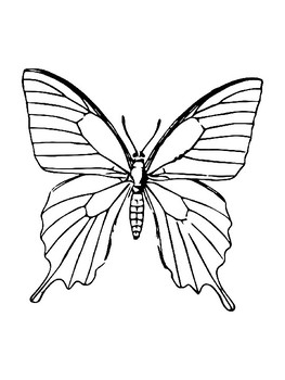 Butterfly Template for Art Project Butterfly Coloring Page Butterfly Outline Art