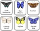 Butterfly Types Printable