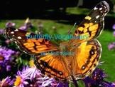 Butterfly Vocabulary Presentation
