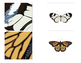 Butterfly Wing Matching Cards