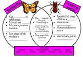 Butterfly and Beetle Venn Diagram