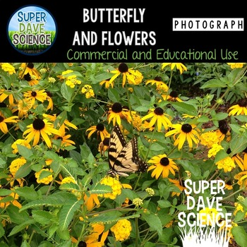 Butterfly and Flowers Photograph
