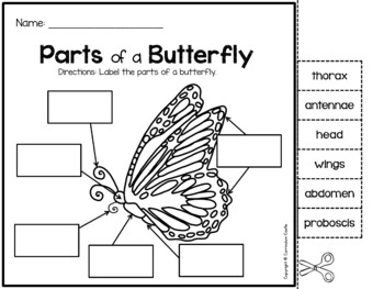 Butterfly and Frog Life Cycle Investigation