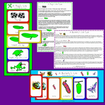 Butterfly and Frog Life Cycles