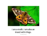 Butterfly and Moth Book
