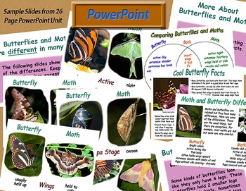 Butterfly and Moth Differences - Compare and Contrast