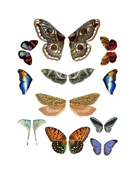 Butterfly and Moth Wing Clip Art