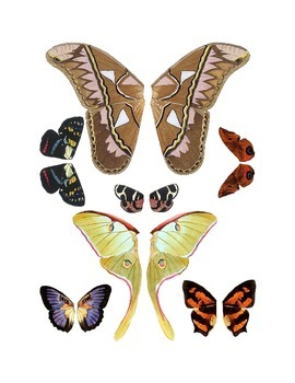 Butterfly and Moth Wing Clip Art 2-Pack