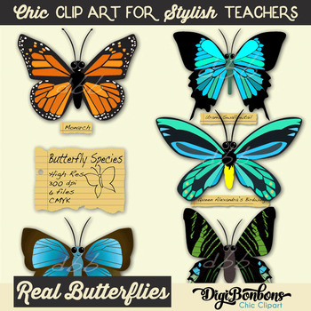 Butterfly digital clip art, Commercial use, monarch butterfly, butterfly clipart