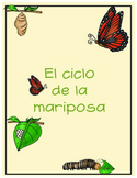 Butterfly life cycle (Spanish)