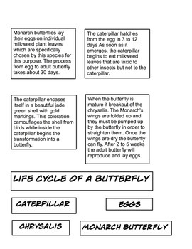 Butterfly life cycle 2 part cards