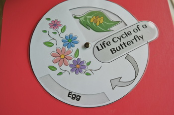 Butterfly life cycle: Wheel/ board game/ cards/worksheets