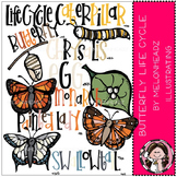 Butterfly life cycle clip art- by Melonheadz