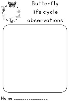 Butterfly life cycle observation sheet