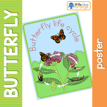 Butterfly life cycle poster