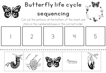 Butterfly Life Cycle Sequencing Activity Worksheet By