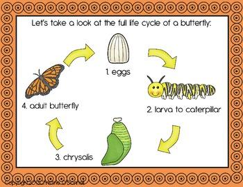 Butterfly life cycle: teacher book, minibook, anchor chart +