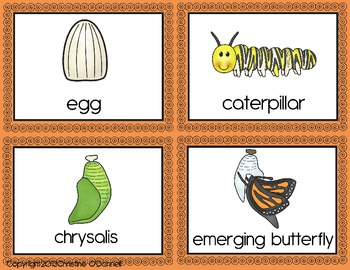 Butterfly life cycle: teacher book, minibook, anchor chart +