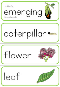 Butterfly life cycle word wall