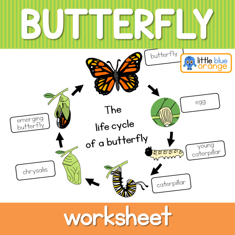 Butterfly life cycle worksheet by Little Blue Orange | TpT