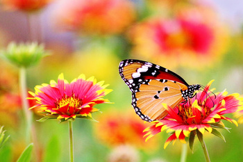 Butterfly on Orange Flower Digital Puzzle VIPKID