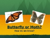 Butterfly or Moth? PPT