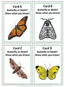 Butterfly or Moth Scavenger Hunt