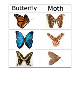 Butterfly versus Moth