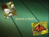 Butterfly vs. Moth Powerpoint