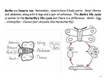 Butterflies and Moths: Lap Book