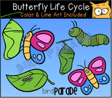 Butterfly Life Cyle Clipart