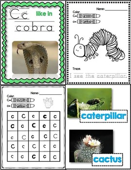 C Like in Cactus (A Letter C Unit Using Real Photos!)