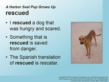 CA Treasures A Harbor Seal Pup Grows Up Grade 2 Unit 4 (Common Core Standards)