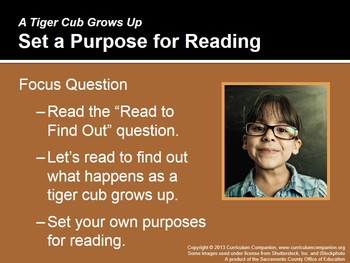 CA Treasures A Tiger Cub Grows Up Grade 1 Unit 5 (Common Core Standards)