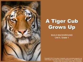 CA Treasures A Tiger Cub Grows Up Grade 1 Unit 5 (Common C