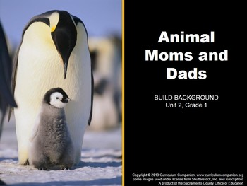 CA Treasures Animal Moms and Dads Grade 1 Unit 2 (Common Core Standards)