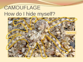 CAMOUFLAGE: How I Hide myself?